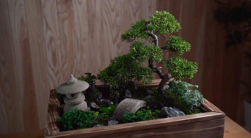 植物男子 Asu【和風の箱庭を作る】