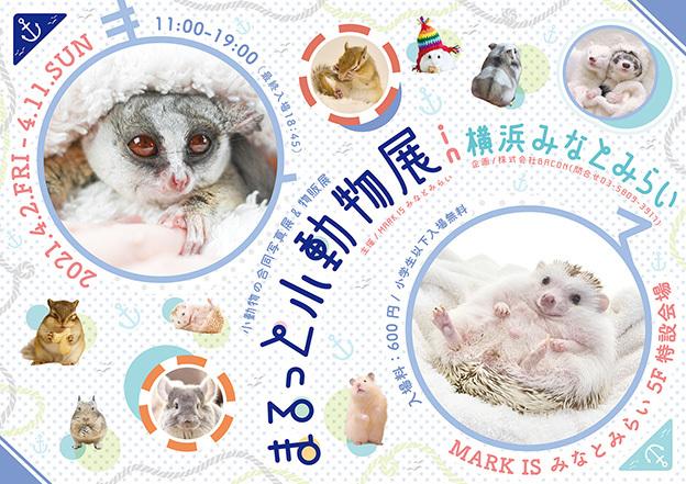 まるっと小動物展in横浜みなとみらい(2020)_Y_修正s