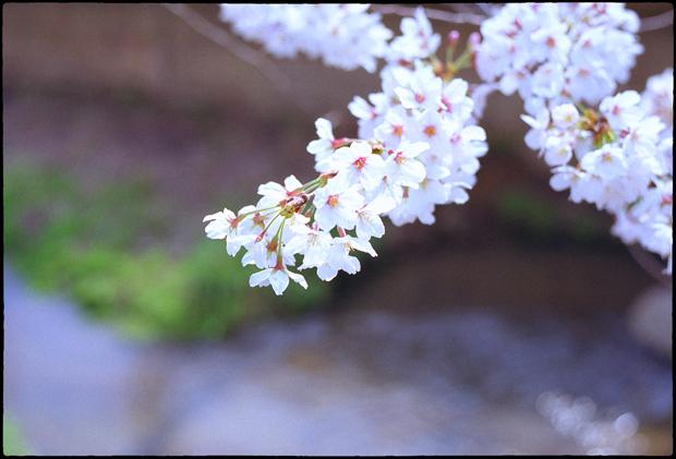 呑川_029