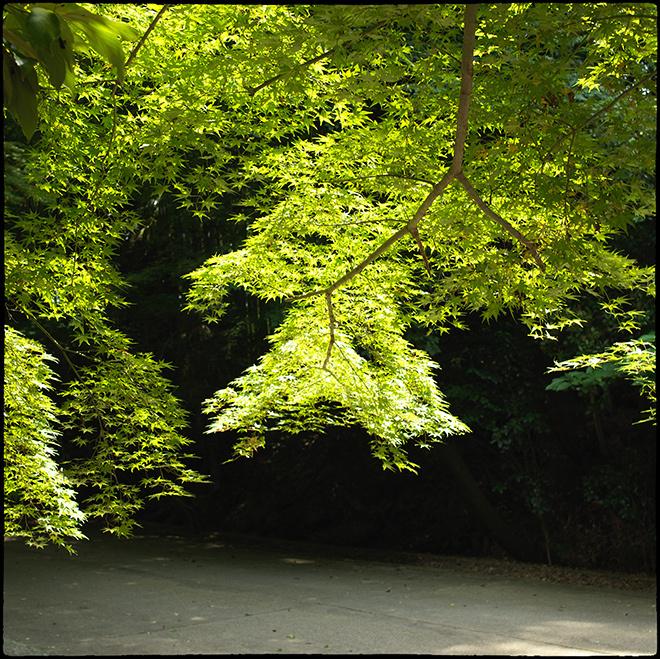 東福寺行き_081
