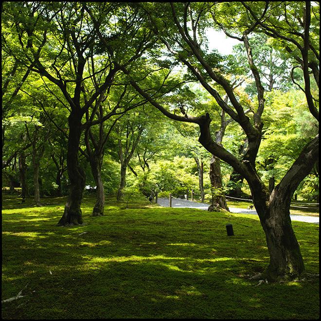 20210713_Kyoto_112