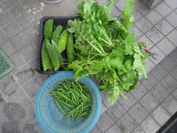 収穫1_20_10_10
