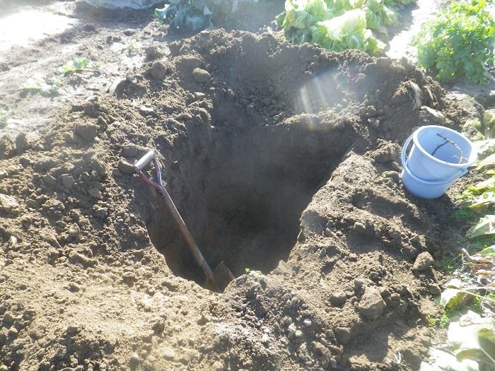 穴掘り2_20_12_20