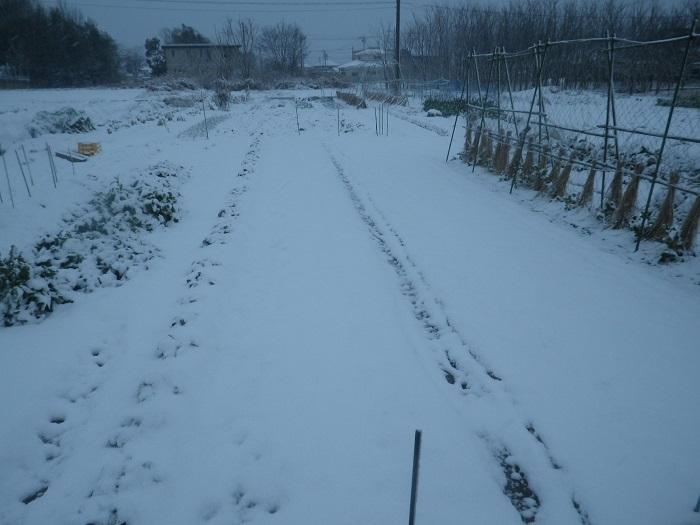 雪1_21_02_18