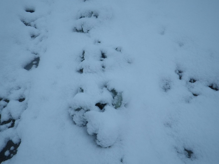 雪2_21_02_18