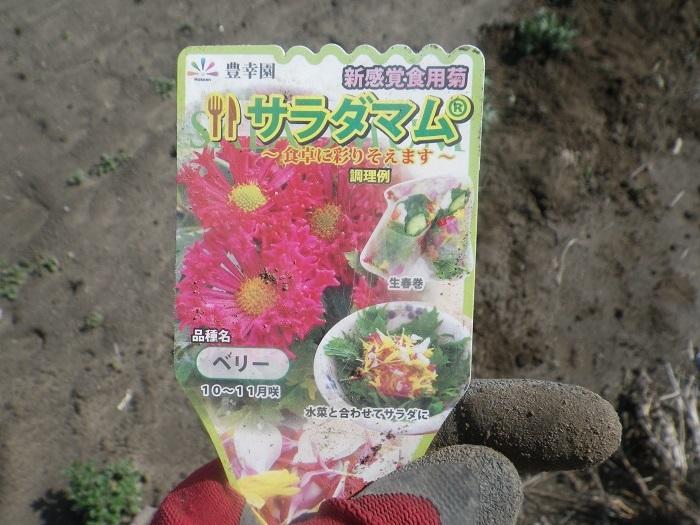 食用菊3_21_03_14