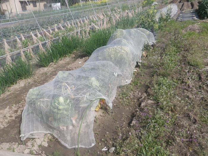 冬野菜3_21_03_27