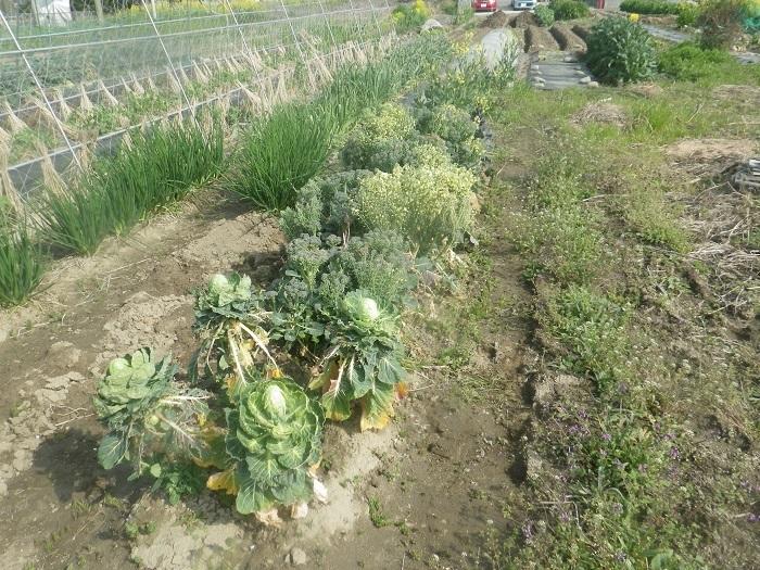 冬野菜4_21_03_27