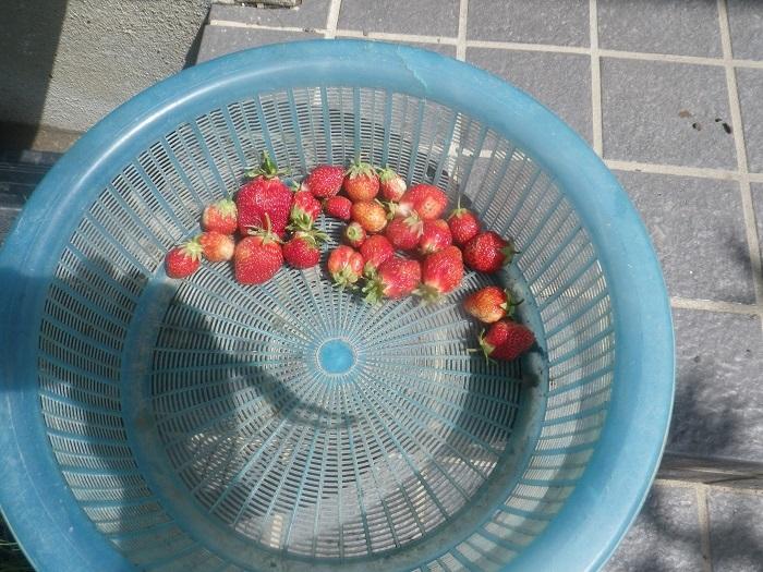 収穫1_21_04_30