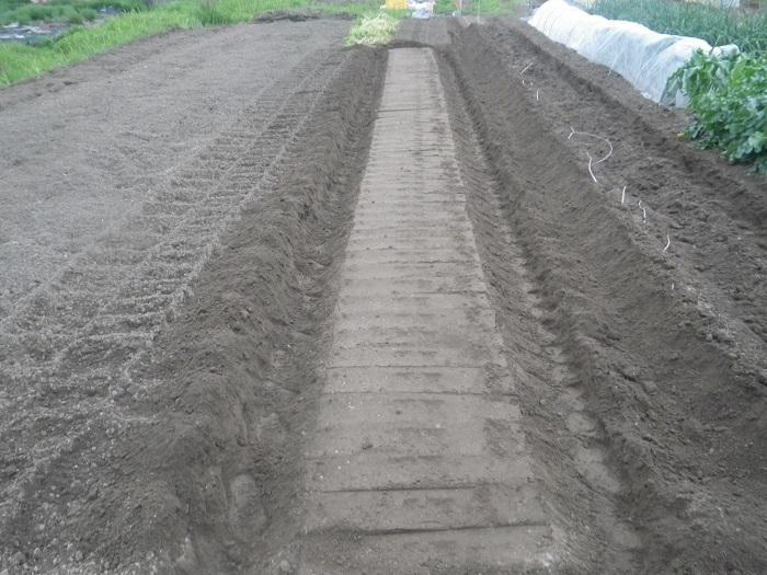 畝作り21_05_05