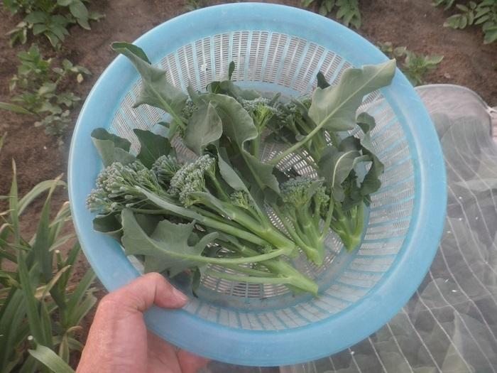 収穫2_21_05_09