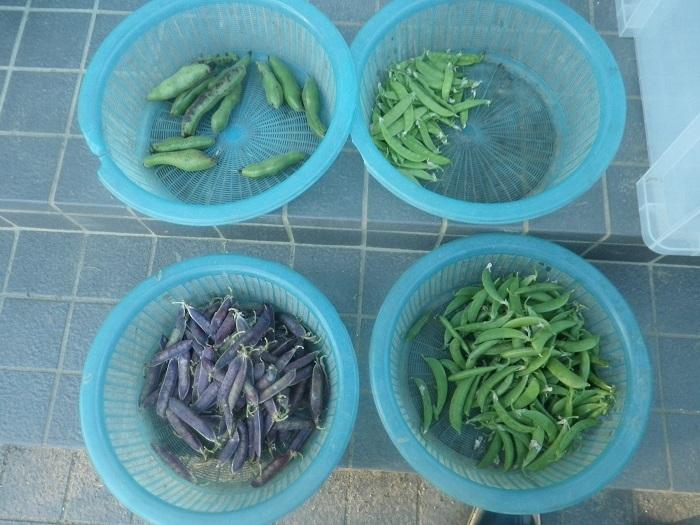 収穫1_21_05_30
