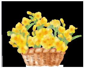 フリージア花かご大色変更2改中央