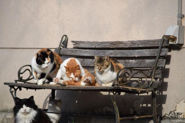 猫18,21,22,23,25