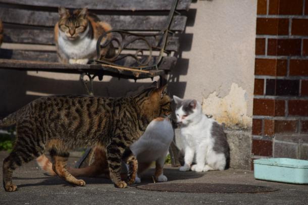 猫21,22,23,24