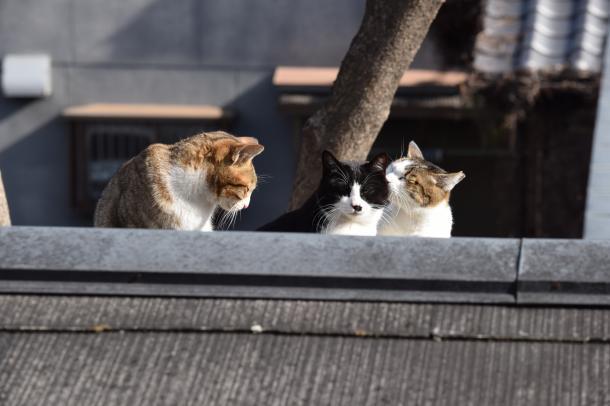 猫1,2,4