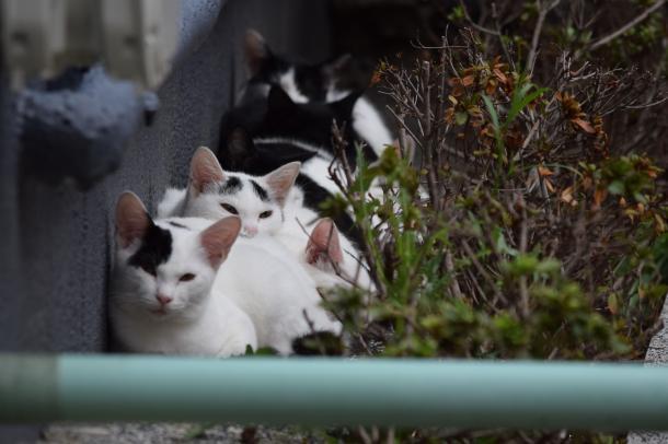 猫2,3,4,5,6,7,8