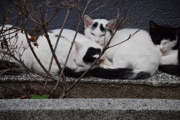 猫3.4.5