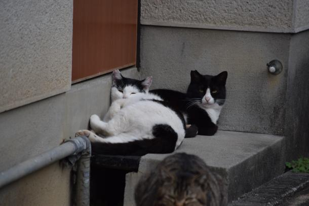 猫5,6,7