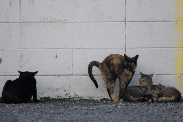 猫17,18,19,20