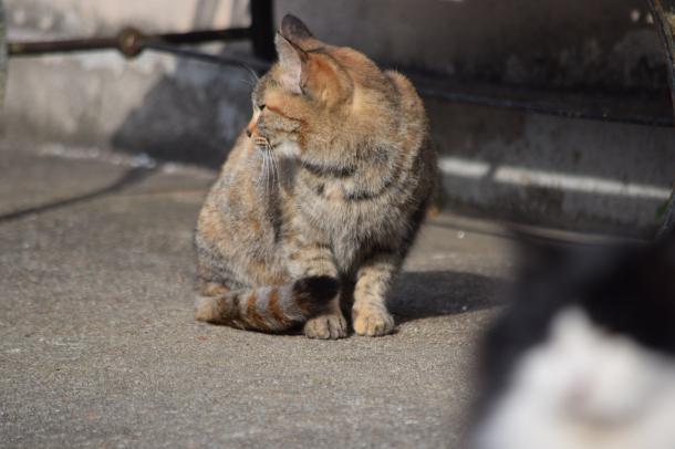 猫18,20