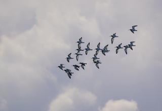 01都鳥の飛翔
