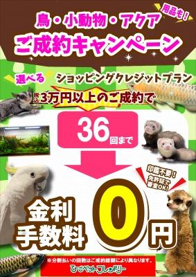【ポスター】SCA・アクア無金利キャンペーン210609