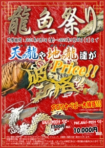 龍魚祭り202109