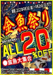 金魚祭り202109