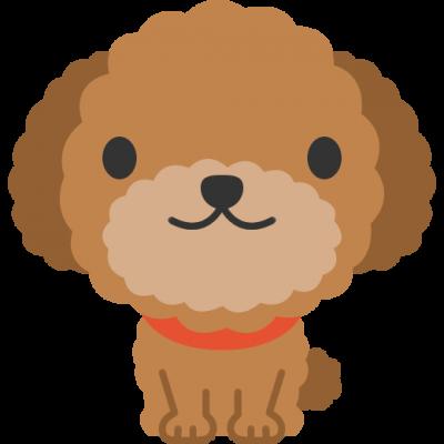 dog-poodle-400x400.png