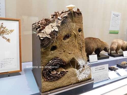 モグラの巣の模型