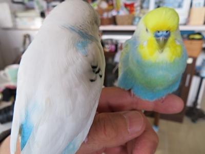 癒しの2羽さん