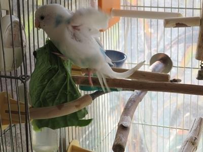 風の小松菜が・・・