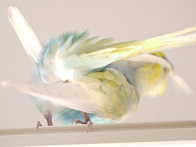 見事な羽繕い