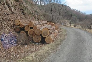 大坊氏の搬出した木