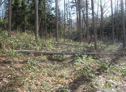 作業中 木の伐採