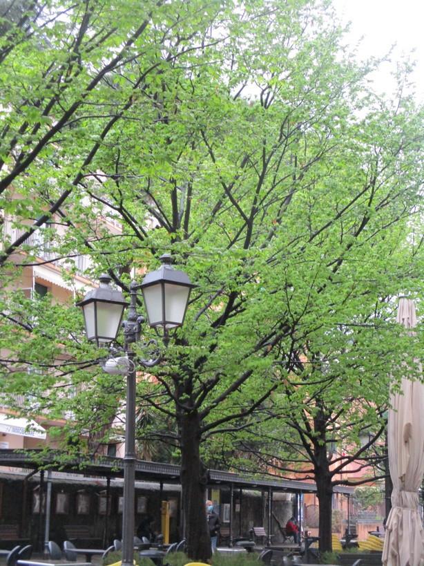 alberi_verde_lampione210327