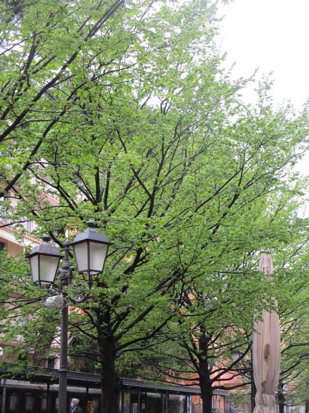 alberi_verde_lampione2_210327