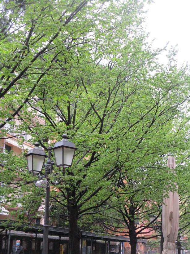 alberi_verde_lampione3_210327
