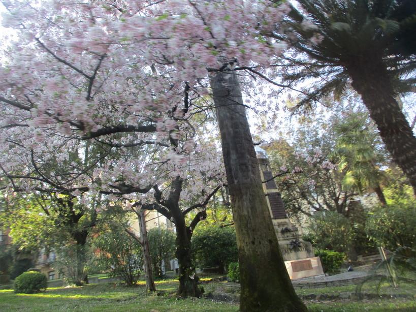 sakura_villa_mina210402_03