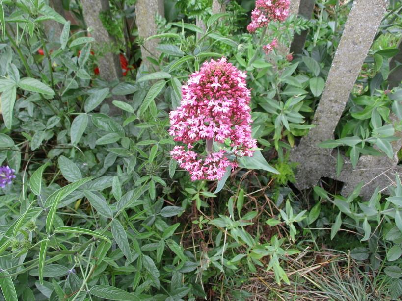 fiori_vicino_ai_binari2_210501