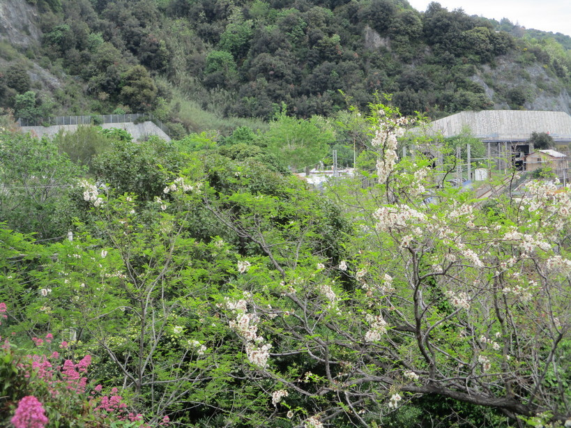 fiori_vicino_ai_binari4_210501