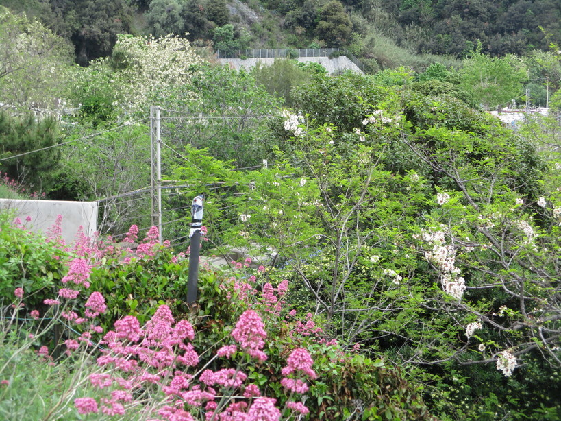 fiori_vicino_ai_binari5_210501