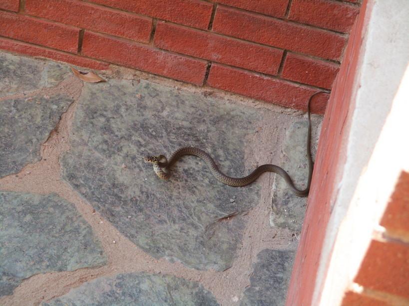 serpente210722
