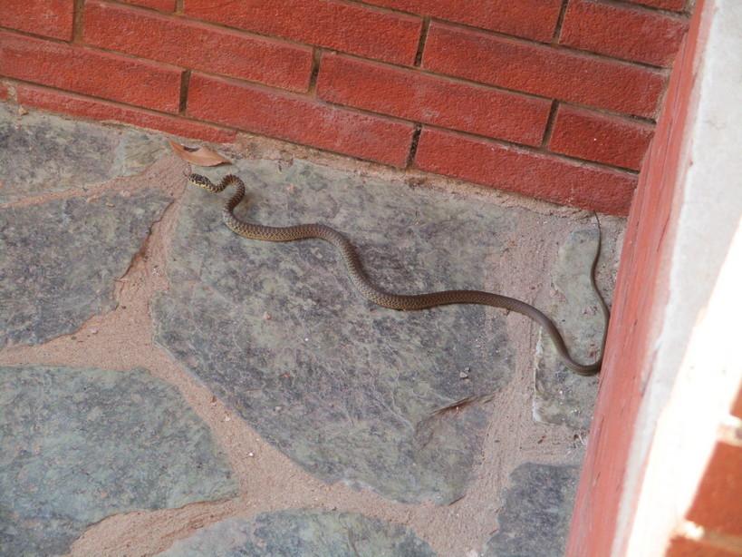 serpente2_210722