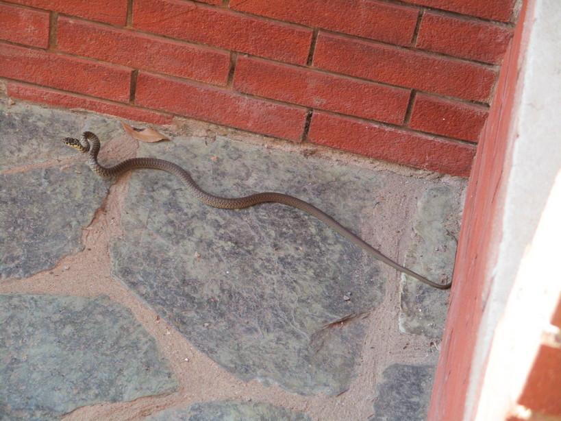 serpente3_210722