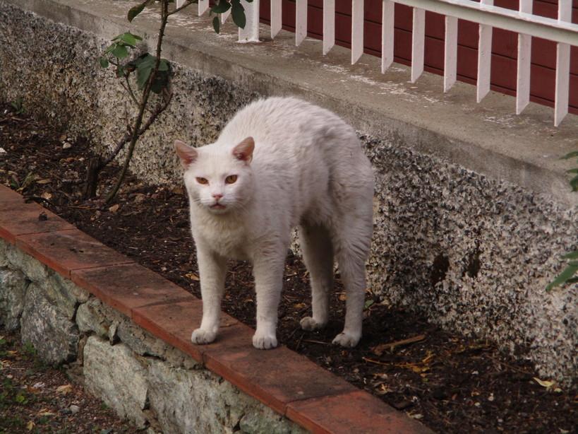 gatto_bianco210910