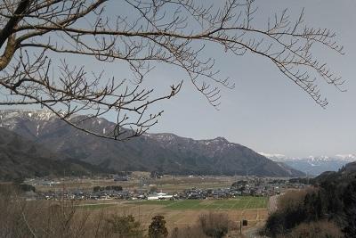 6鷲ヶ岳と春を待つ桜