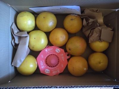 カリフォルニアグレープフルーツ