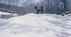 2 -1 mucchan 雪の日
